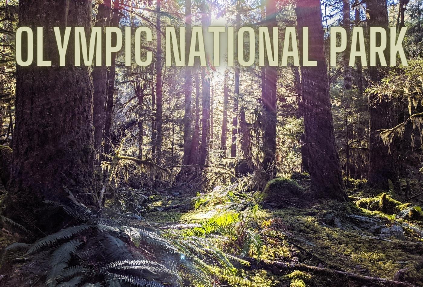 A Walk Through Olympic National Park