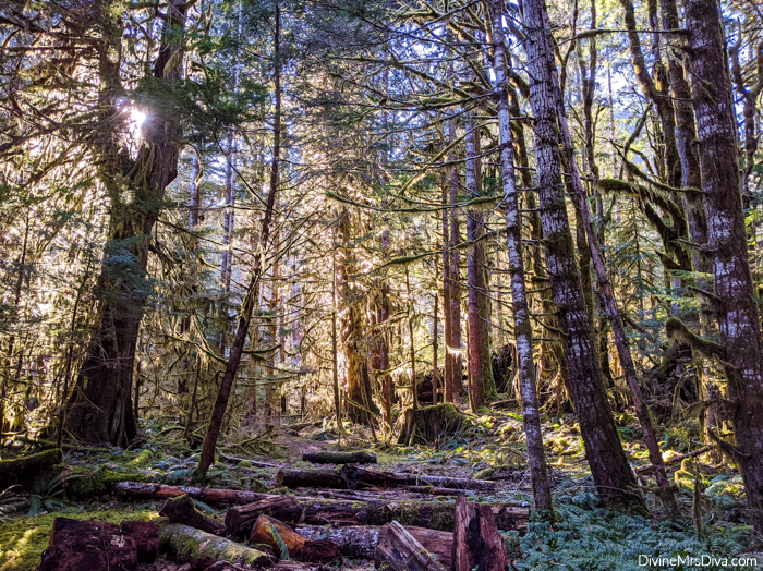 A walk through Olympic National Park (Staircase Area) in March 2020 - DivineMrsDiva.com #travel #roadtrip #longbeachwa #pnw #plussizetravel
