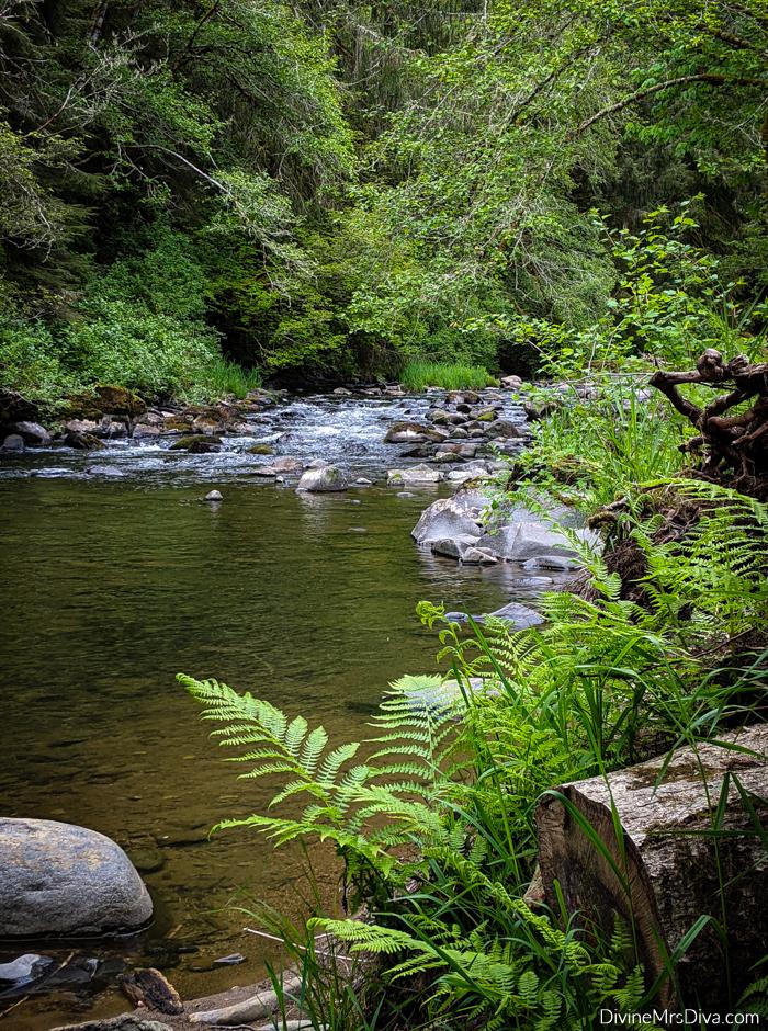 Exploring Tidepools in Pacific City, Oregon - DivineMrsDiva.com #OregonCoast #VisitOregon #PacificCity #fatgirlstraveling